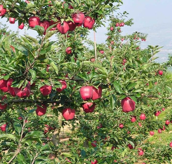 应季水果货源产地直发,水果免费代理,全国水果一件代发